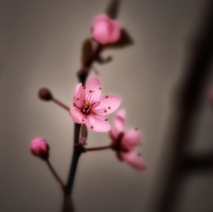cherry-blossom-spring-Jewelry